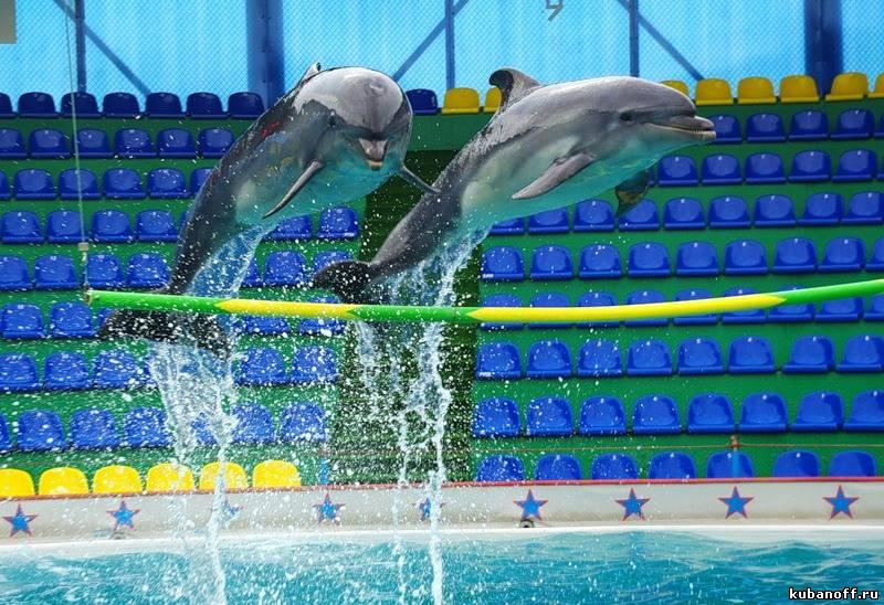 Дельфиньи каникулы. Фоторепортаж из сочинского дельфинария.
