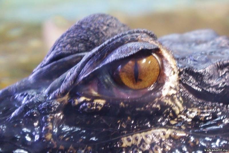 Приходите, дети, в Аквариум гулять!… Фоторепортаж из мацестинского Аквариума.